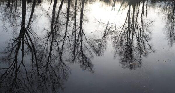 Bomen weerspiegelen in het water